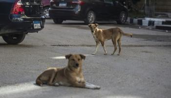 صورة فى شوارعنا كلاب ضالة